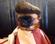 Dog with Elvis hair